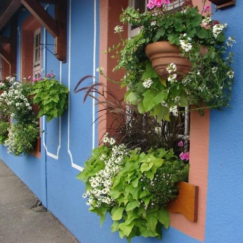 Facade du restaurant, avec ses fleurs